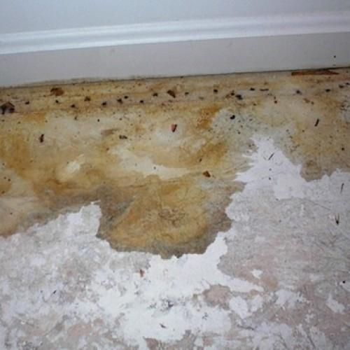 Urine/Pee Damage in a Kitchen