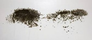 Black Mould is considered extremely toxic and remediation should be left to the experts.
