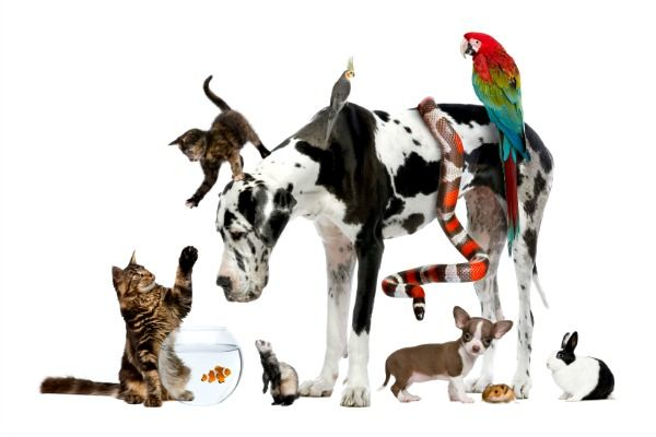 reasons-pets-are-bad-for-your-health-344055599-jun-28-2012-600x400