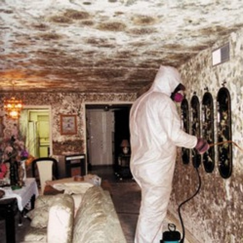 Mould & Water Damage Cleaning Services