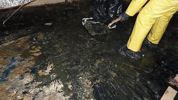 Sewage contamination clean up service Melbourne
